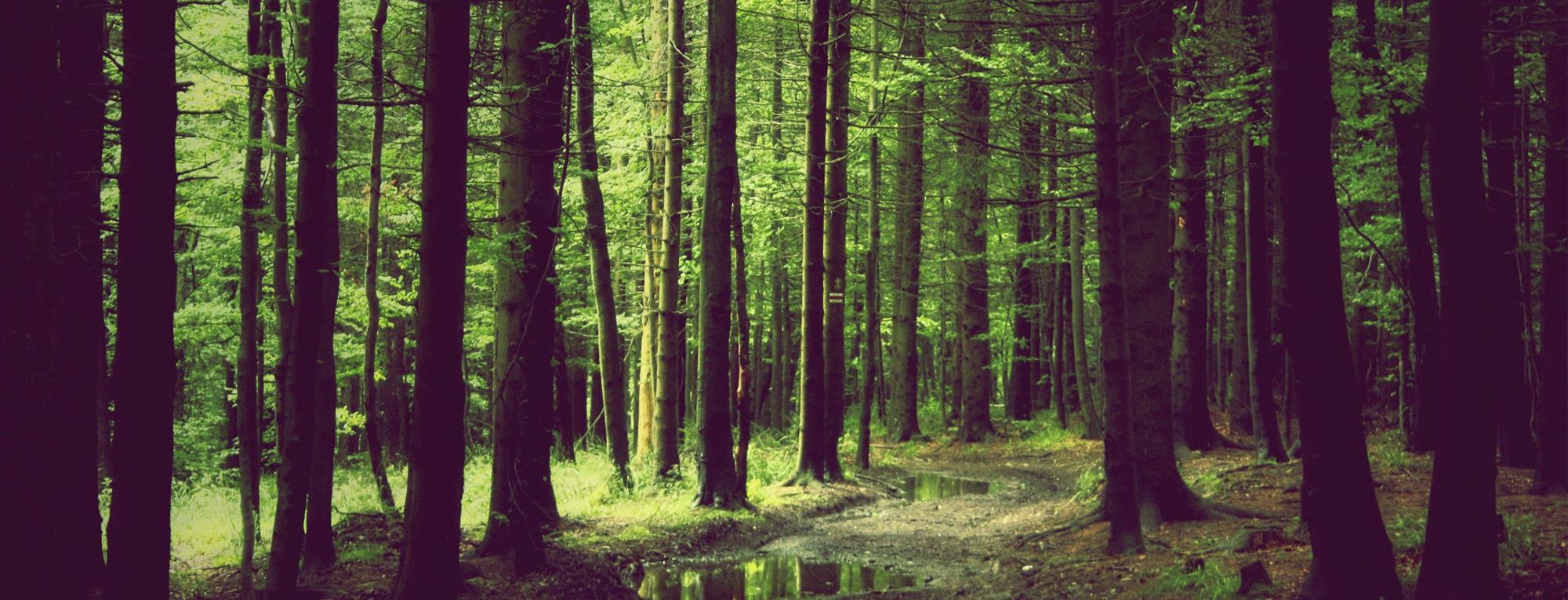 Lesy Beskydy